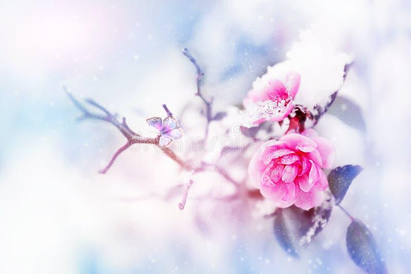 Rosas y mariposa en la nieve y helada rosadas hermosas en un fondo azul y rosado snowing Imagen natural del invierno artístico SE fotos de archivo libres de regalías