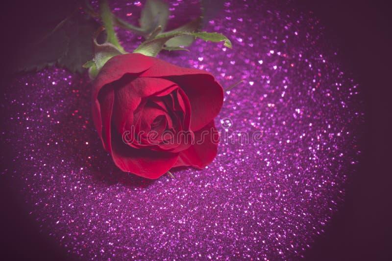 Rose über lila abstrakten Hintergrund mit Bokeh lizenzfreie stockfotografie