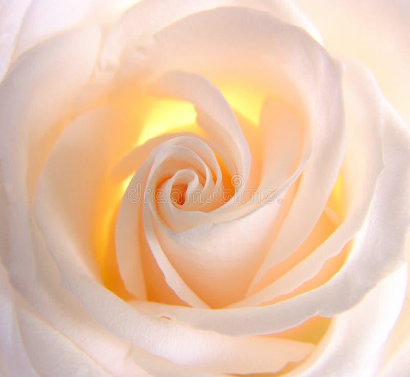 rose świecący fotografia stock