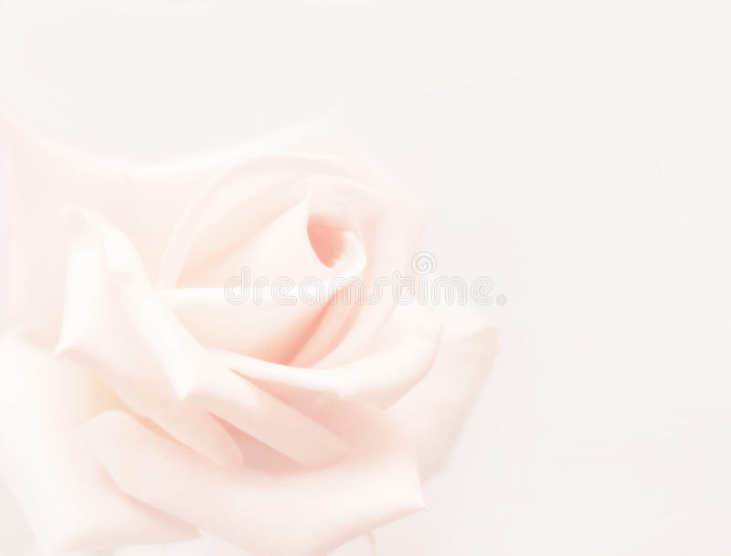 Download Rose stock photo. Image of history, colored, retro, flower - 10716926