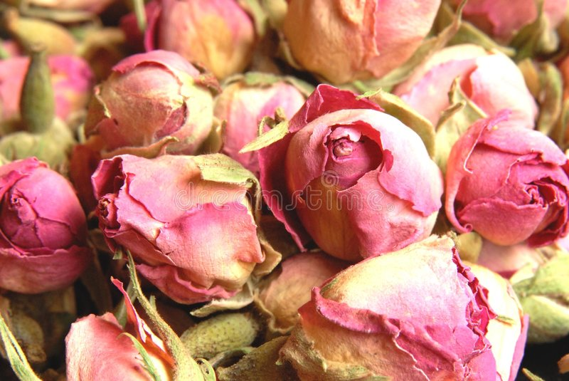 Rose. Gorgeous dried rose buds great for tea stock images