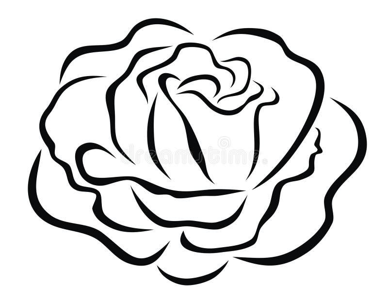 Rose stock illustration
