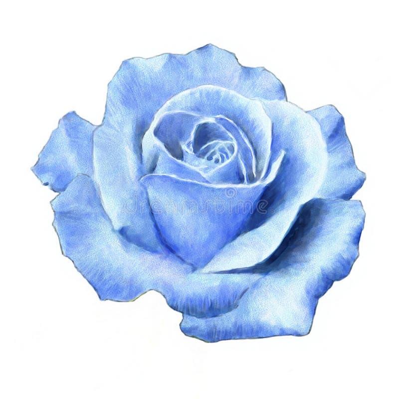 Download Rose stock illustration. Image of growth, garden, fragrance - 13322226