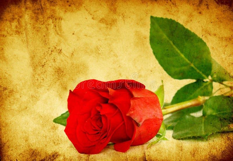 Download Rose stock image. Image of antique, paper, aged, manuscript - 16029363