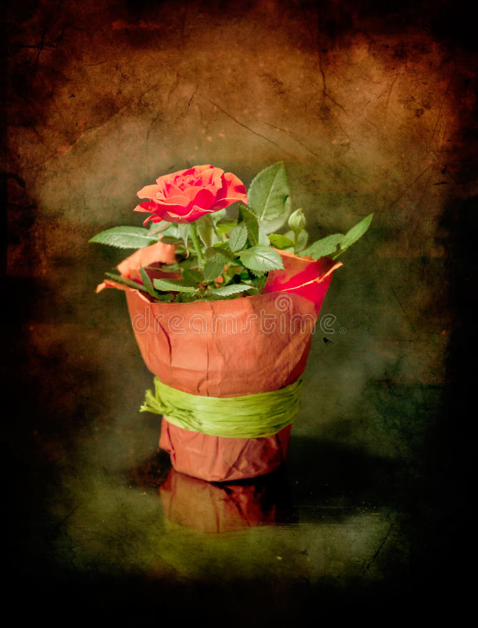 Download Rose stock image. Image of note, scroll, border, flower - 18700255