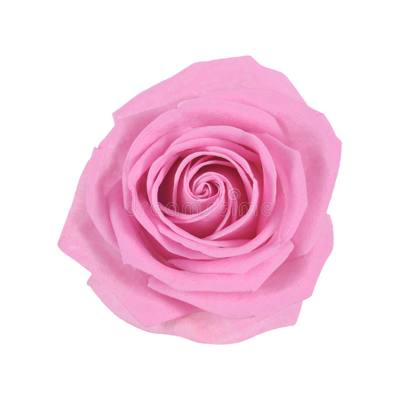 Download Rose stock image. Image of flower, flowers, cutouts, isolated - 19681883