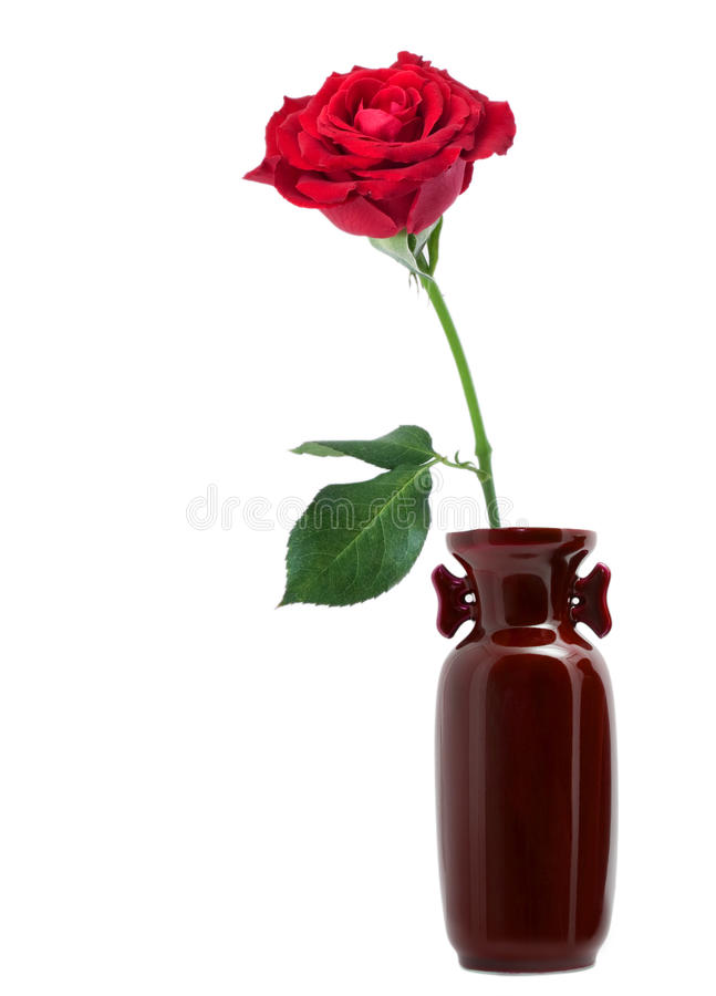 Rose images stock