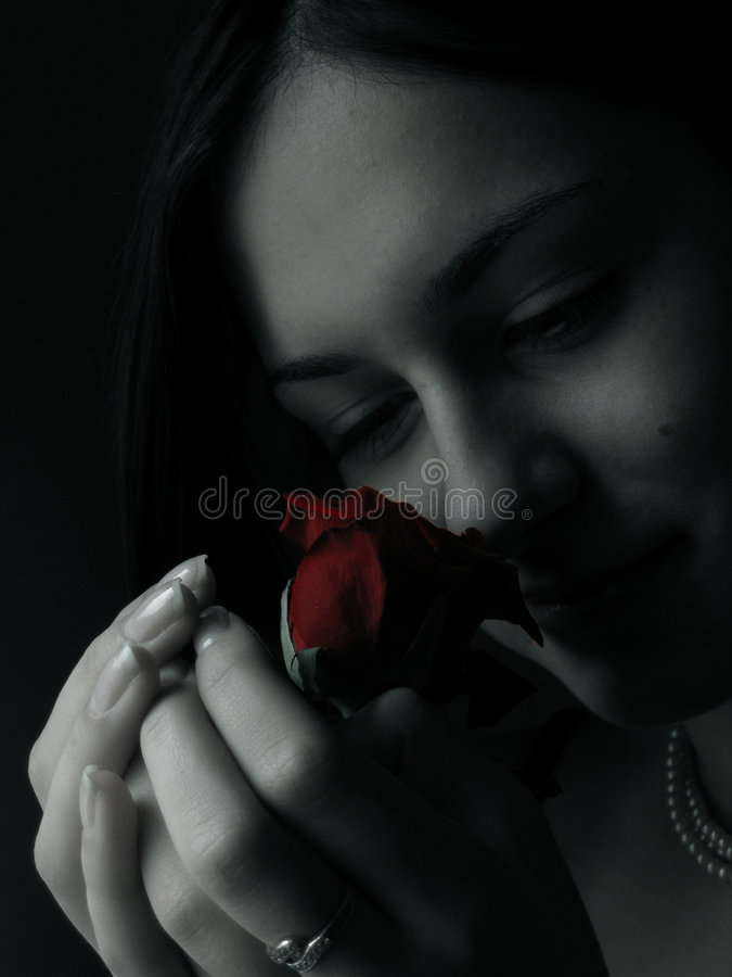 Rose 2 foto de archivo
