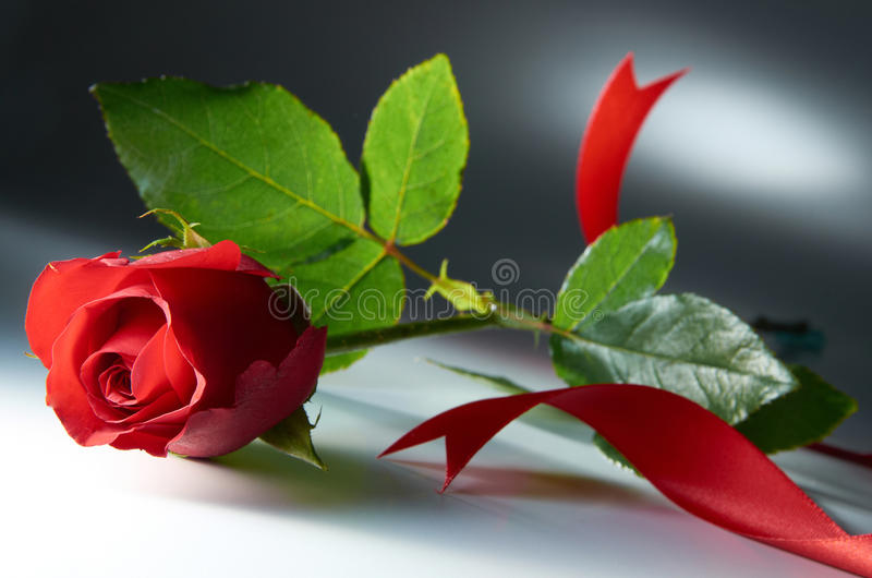 Download Rose stock photo. Image of pattern, decoration, passion - 22491554