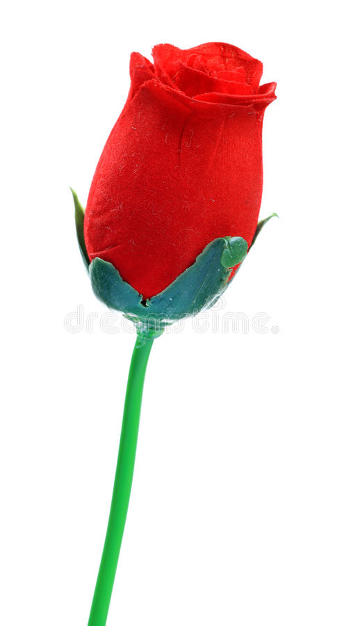 Download Rose stock photo. Image of love, concept, petals, flower - 25533350