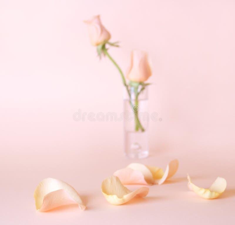 Download Rose immagine stock. Immagine di modello, pink, aromatherapy - 2664195
