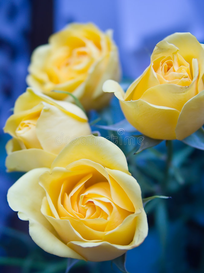 Free Rose 3 Royalty Free Stock Image - 218196