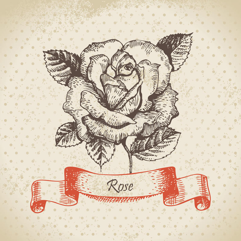 Rose libre illustration