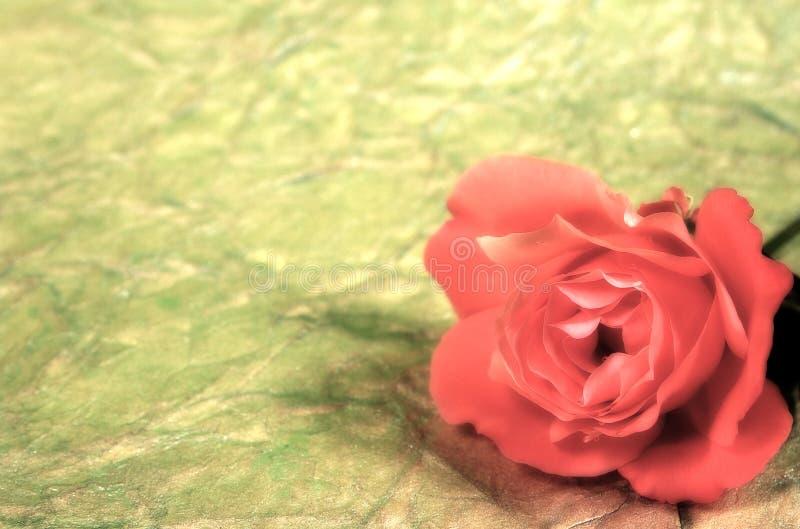 Download Rose, zdjęcie stock. Obraz złożonej z plama, kwiat, romans - 35860