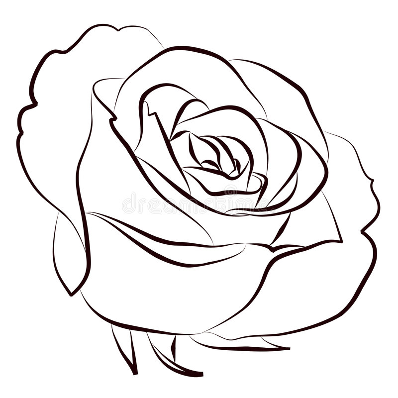 Rose illustration de vecteur