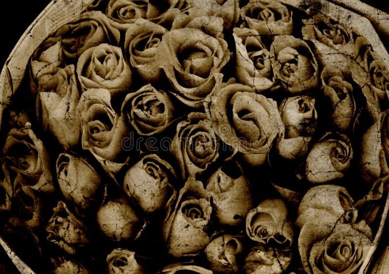 Rose photographie stock libre de droits