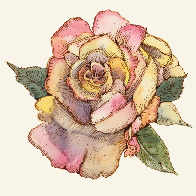 Rose vektor abbildung