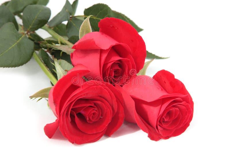 Download Rose fotografia stock. Immagine di background, oggetto - 7310028