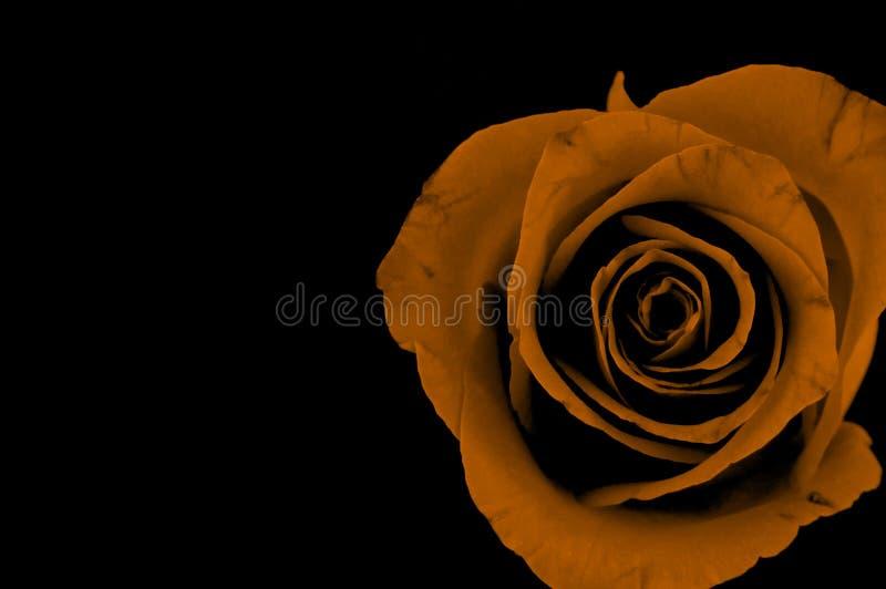 Download Rose image stock. Image du orange, valentine, abstrait - 744931