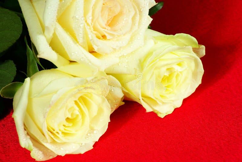 Download Rose Stock Photo - Image: 7505220