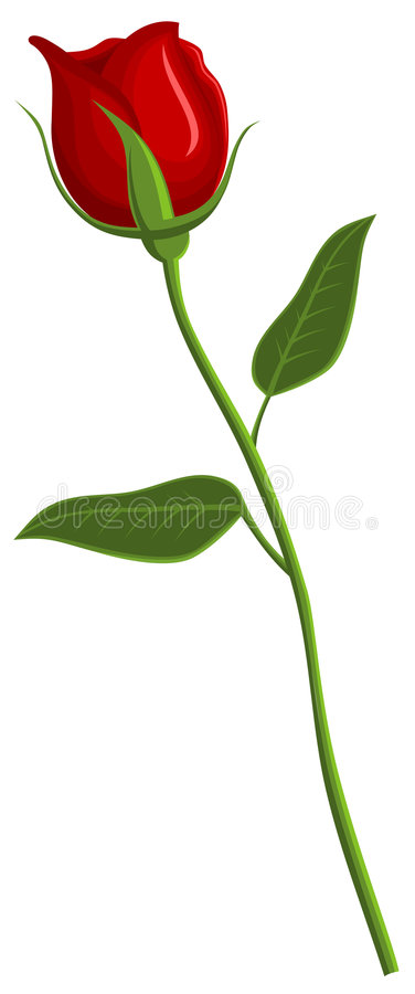 Download Rose stock vector. Illustration of graphic, flower, valentine - 7686950