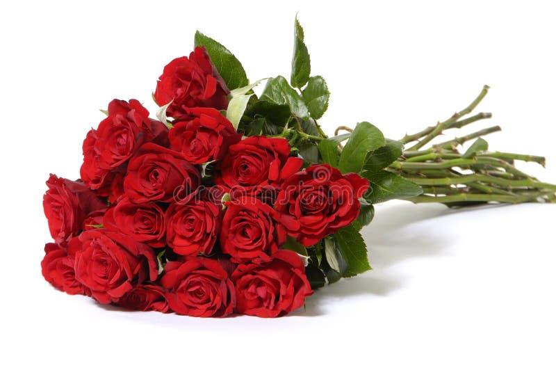 Download Rose stock image. Image of affection, floral, decoration - 7731371
