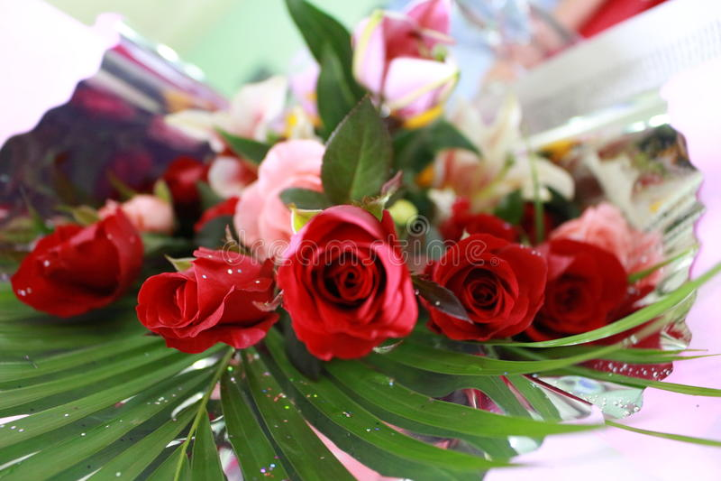rose fotografie stock libere da diritti