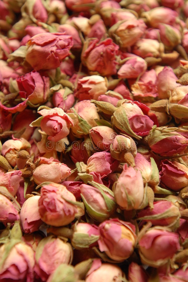 Rose. Buds, great for tea stock photo