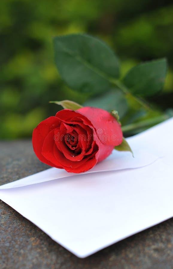 Download Rose stockfoto. Bild von geliebter, inneres, braut, auslegung - 9089158