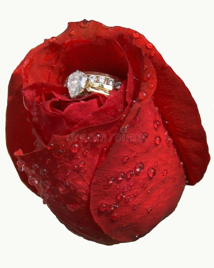 Rose & diamanti (isolati) fotografia stock