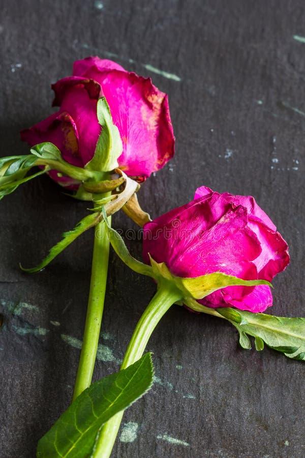 Rose appassite sul fondo dell'ardesia immagine stock