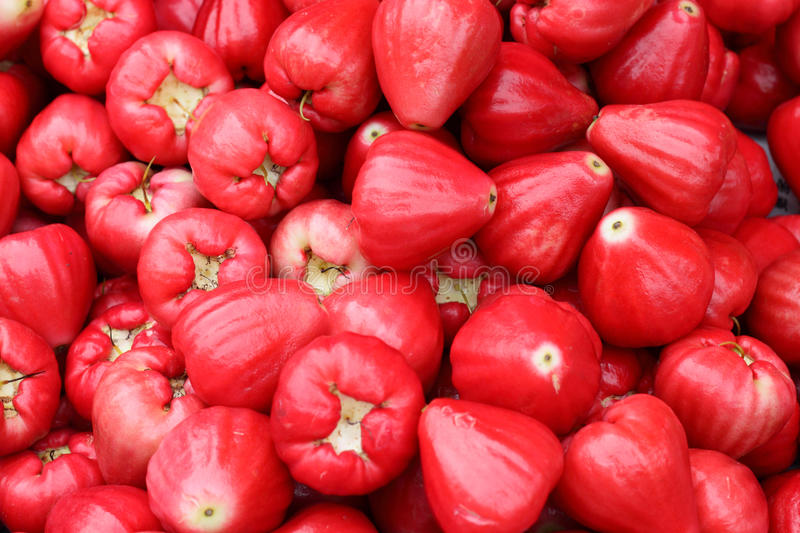 Rose Apple lizenzfreie stockbilder