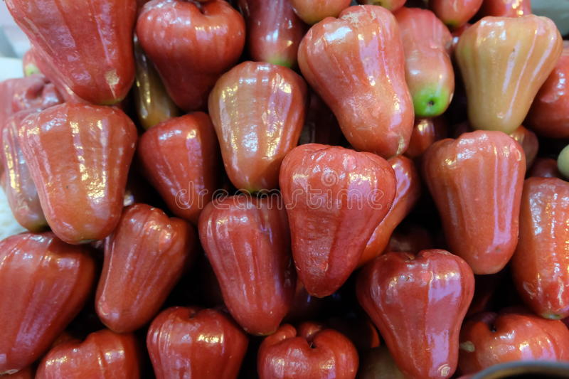 Rose apple stock photos