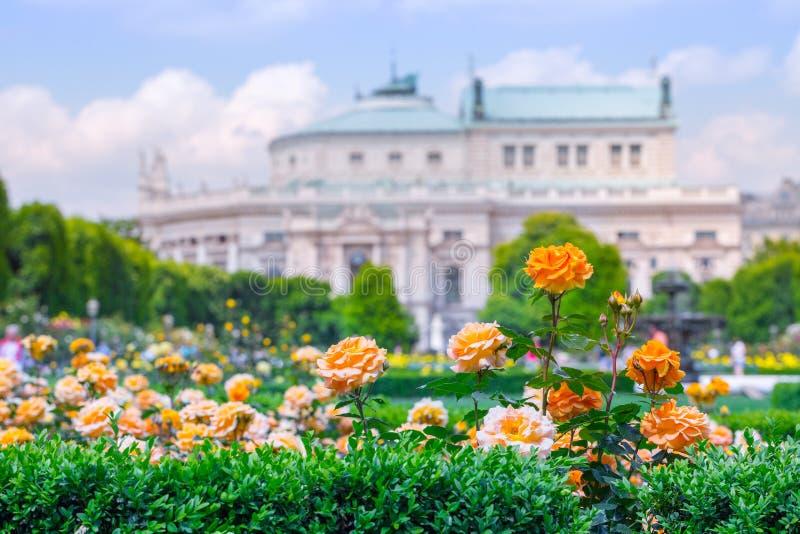 Rose arancio di fioritura fertili in roseto E fotografie stock libere da diritti