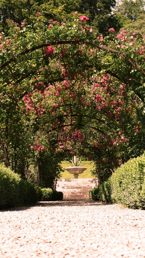 Rose Arbor Avenue in a Traditional Rose Garden royalty free stock image