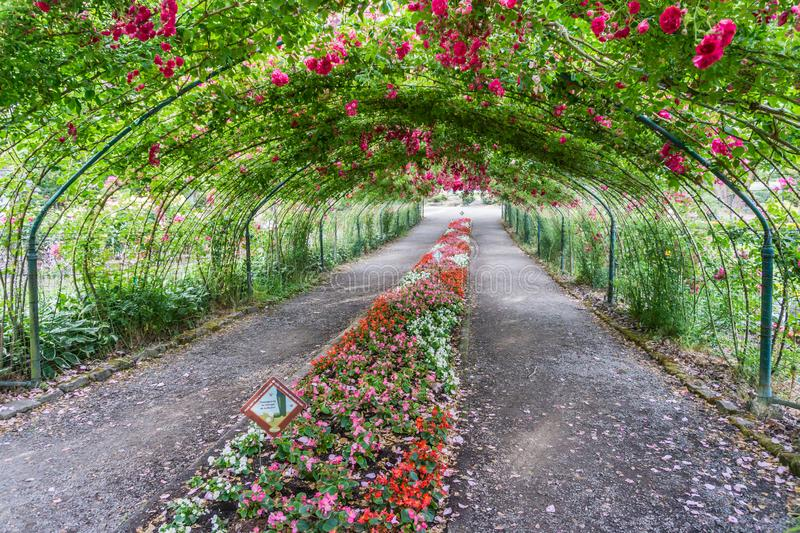 Rose Arbor Tunnel 2 stock image