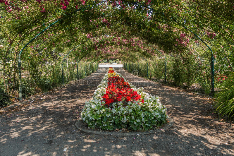 Download Rose Arbor At Point Defiance 2 Stock Image - Image of state, pacific: 56575875
