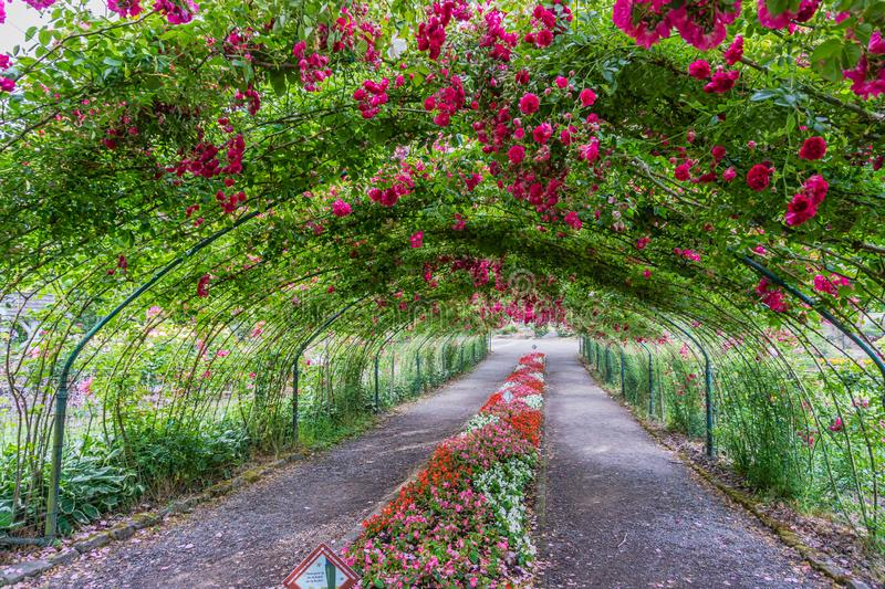 Rose Arbor Tunnel 3 royalty free stock photos