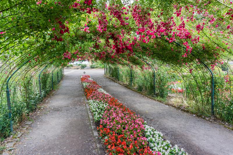 Rose Arbor Tunnel 9 royalty free stock images