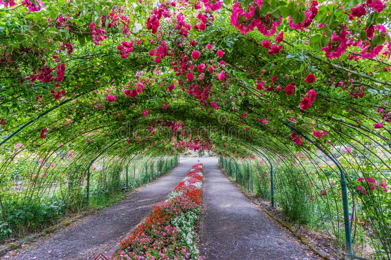 Rose Arbor Tunnel 4 royalty free stock image