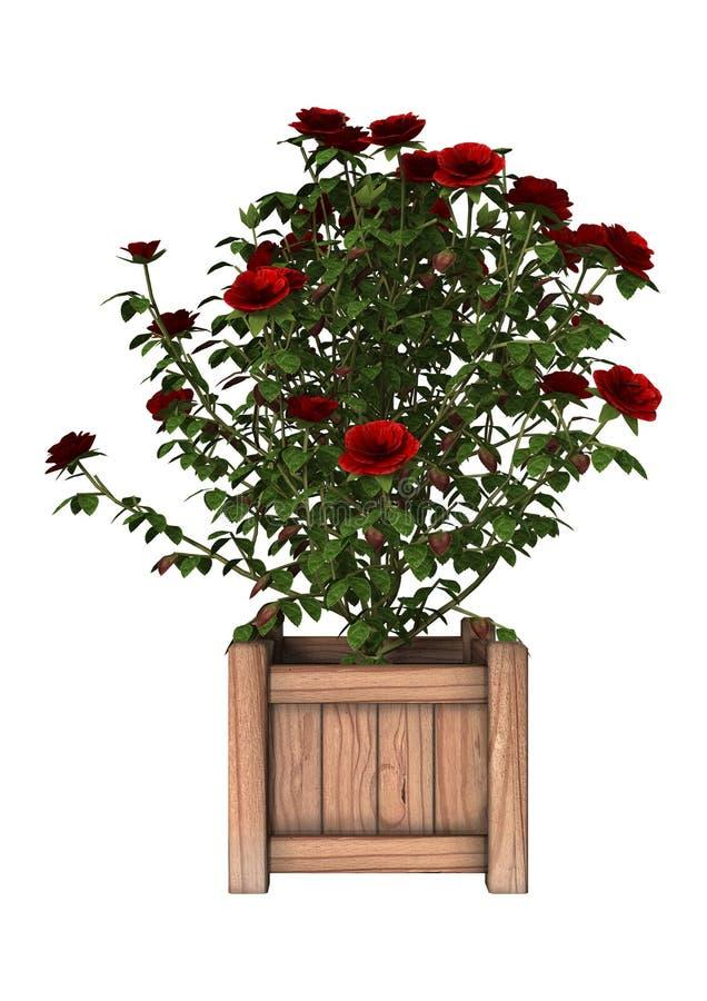 Rose arbusto roja ilustración del vector