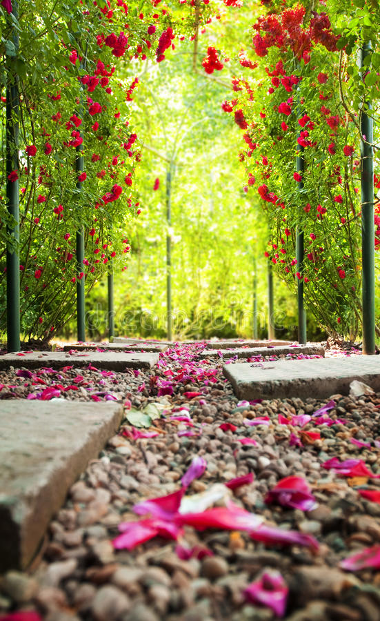 Free Rose Arch Royalty Free Stock Photography - 9695557