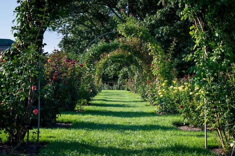 Rose arch. Rose aches in hershey gardens royalty free stock photography