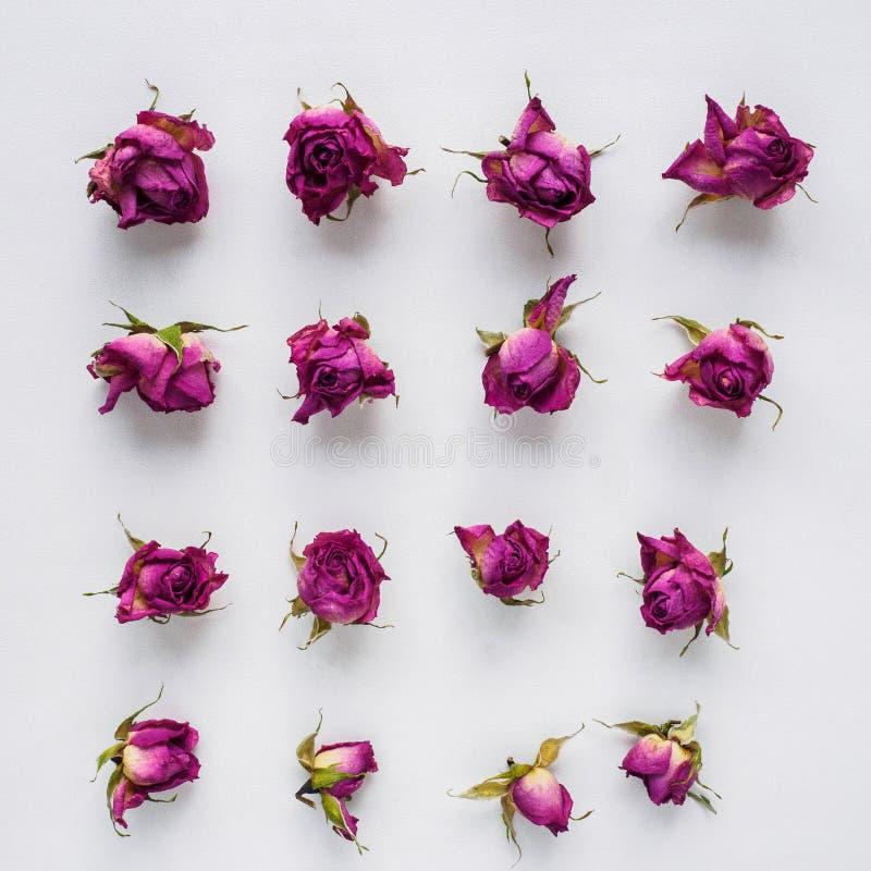 Rose asciutte su priorità bassa bianca fotografia stock libera da diritti