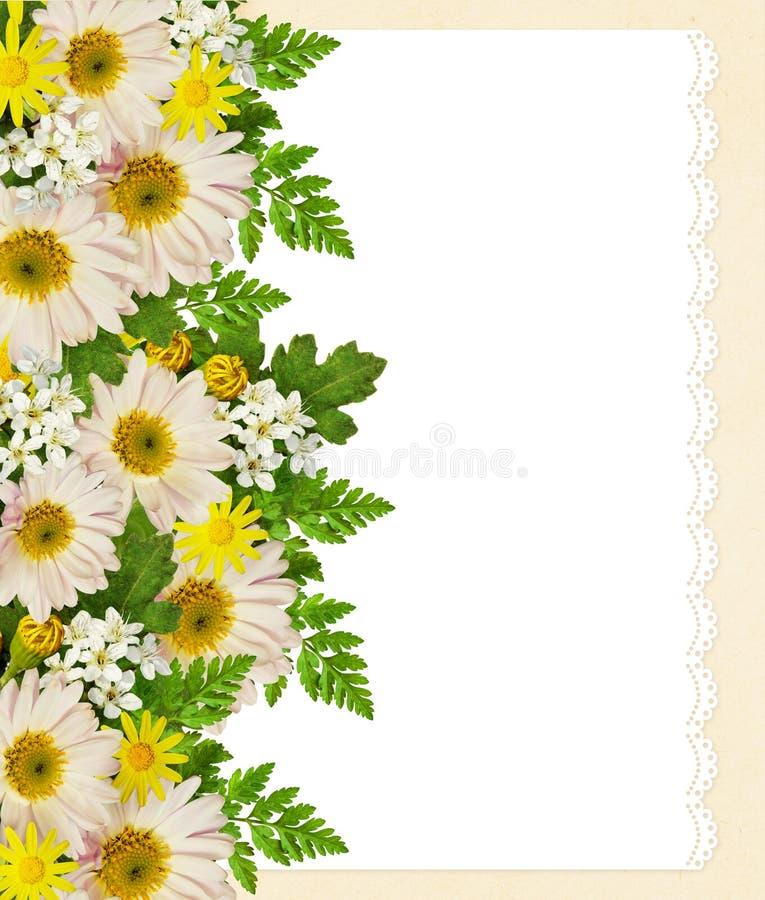 Rose, asters et bord de fleurs sauvages photos libres de droits