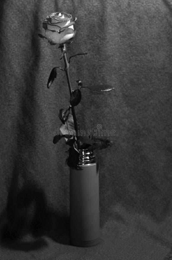 Rose auf einem Stamm in einem Vase lizenzfreie stockbilder