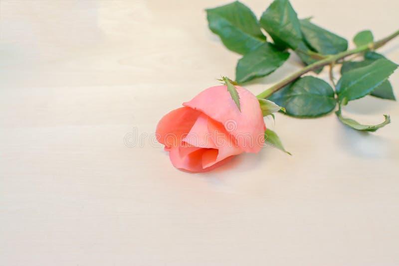 Rose auf hölzernem Hintergrund stockbilder