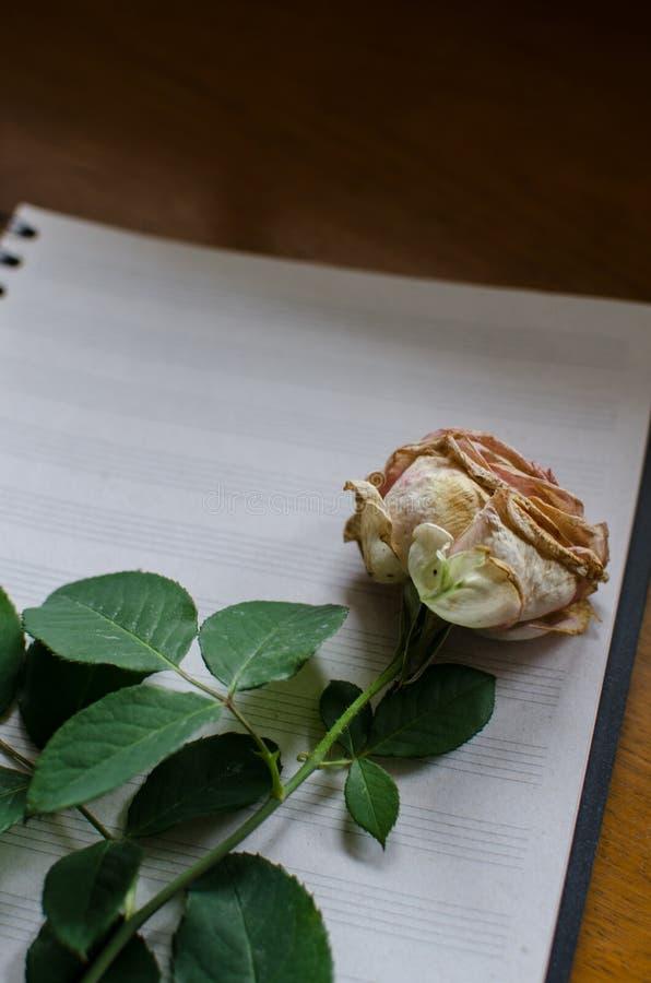 Rose auf Pentagramnotizbuch lizenzfreies stockfoto