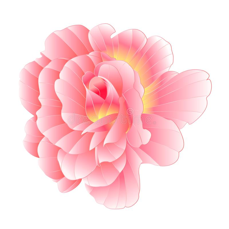 Rose rose avec aquarelle centre orange sur un vecteur d'arrière-plan blanc illustration modifiable h illustration libre de droits