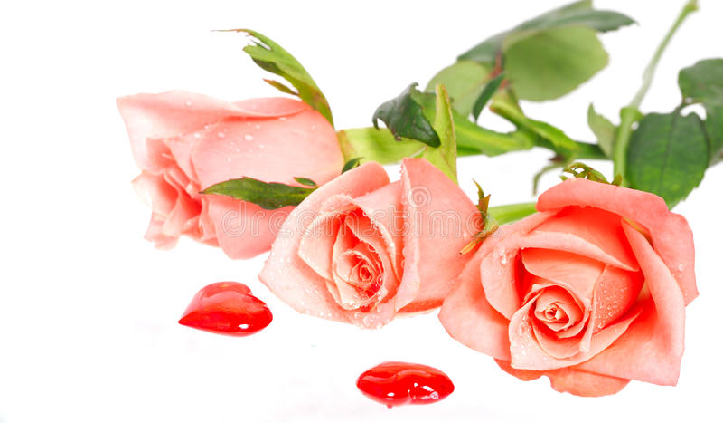 Rose avec des baisses de l'eau et de deux coeurs tout près image stock